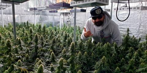 Diario di un grower italiano. La prima puntata