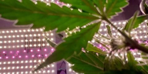 Gli strumenti indispensabili per una perfetta coltivazione indoor